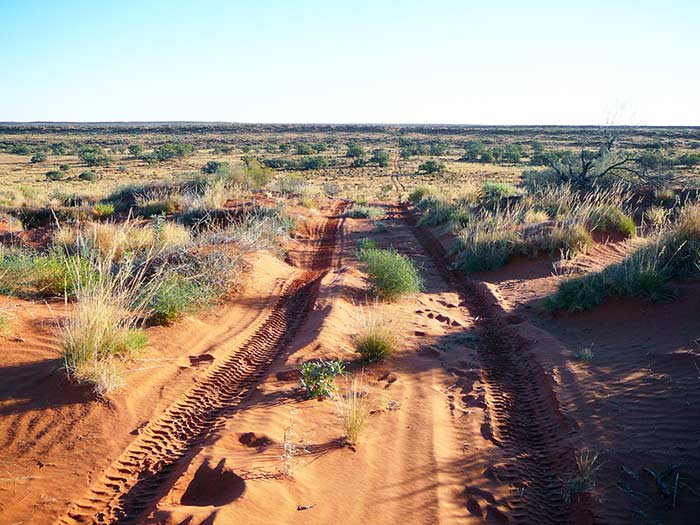 photo of the North Simpson Desert