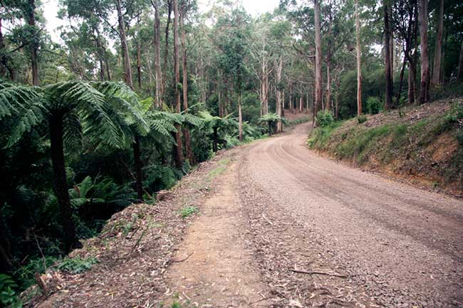 photo of the Otway Ranges